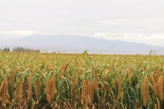 首个中国农民丰收节,小度农庄告诉你秋收有多美