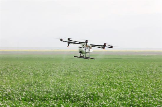 无人机在农田喷撒作业.png