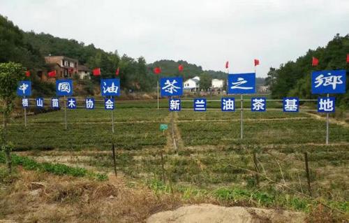 见证丨40年行业变迁:油茶香飘十四省,农民生活大变样