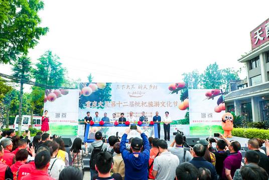 成果丰硕,精彩持续,大足第十二届枇杷文化节圆满举行
