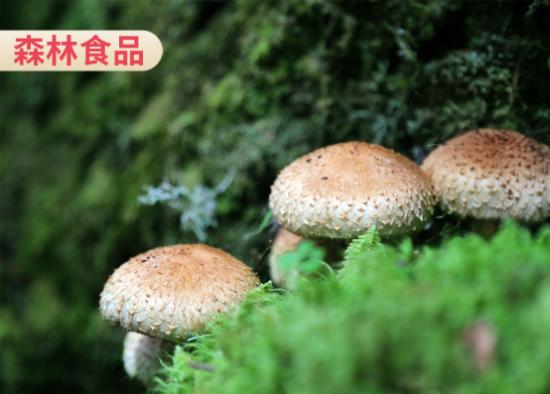 来自森林的森林食品